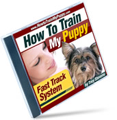 TrainPuppy_Jewel_3